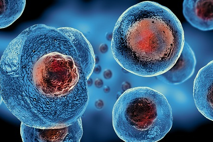 Umbilical Stem Cells Have Potential