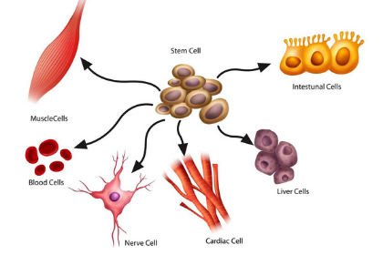 Stem Cells & Other Cell Types