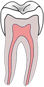tooth pulp location