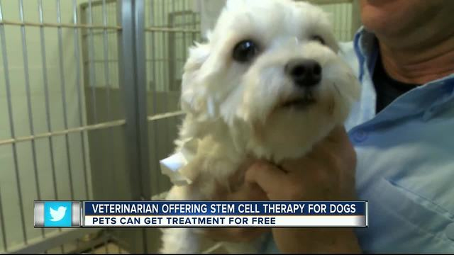 Umbilical Cord Tissue To Treat Arthritis Is For The Dogs Too